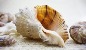 shell-1348742_1920